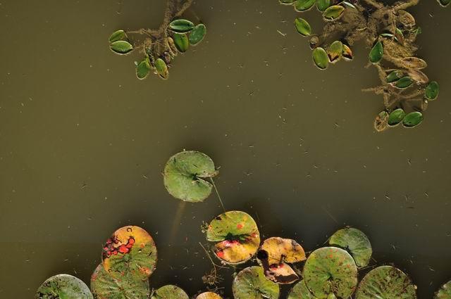 gradina botanica jibou - foto lucian muntean _0014