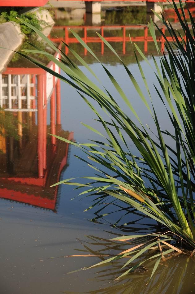 gradina botanica jibou - foto lucian muntean _0015
