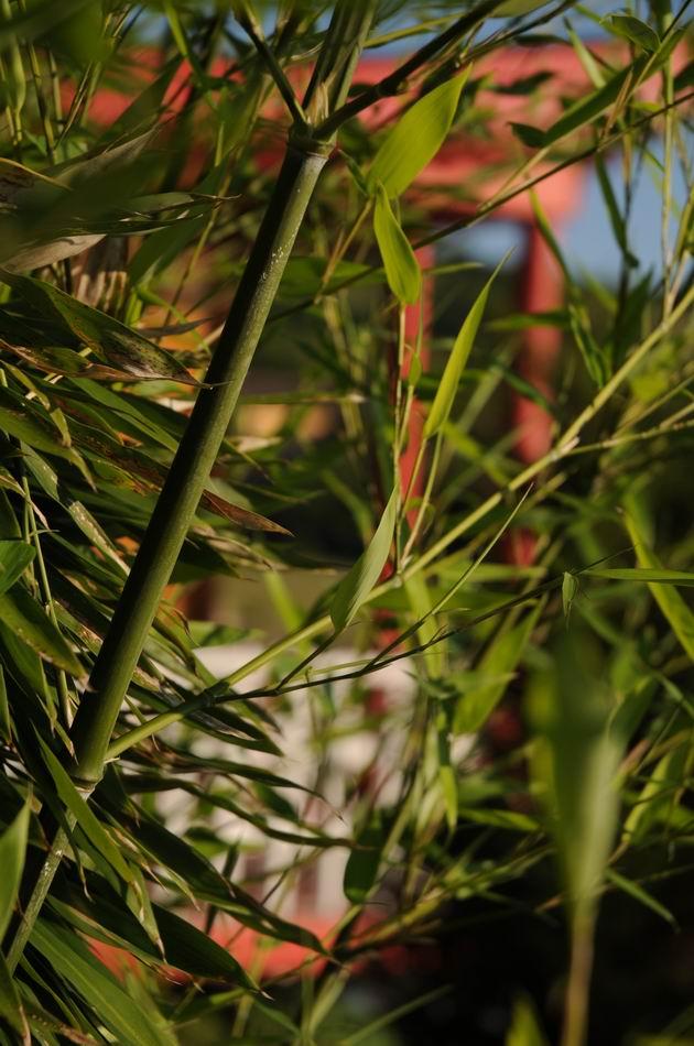 gradina botanica jibou - foto lucian muntean _0016