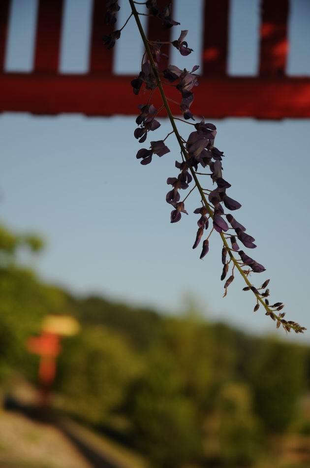 gradina botanica jibou - foto lucian muntean _0017