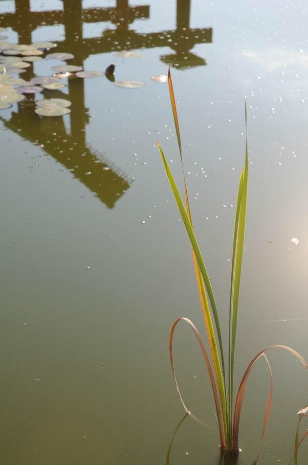 gradina botanica jibou - foto lucian muntean _0018