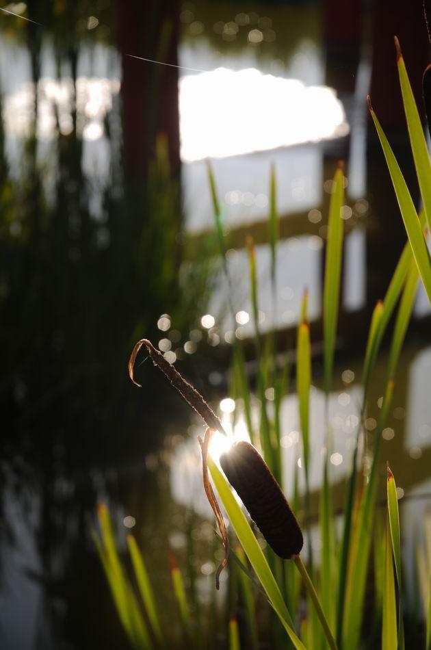 gradina botanica jibou - foto lucian muntean _0019