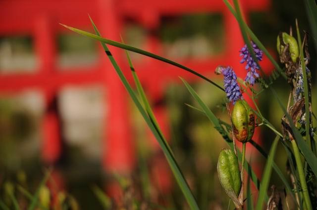 gradina botanica jibou - foto lucian muntean _0023