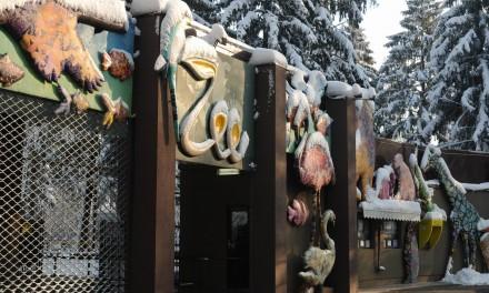Iarna la Zoo
