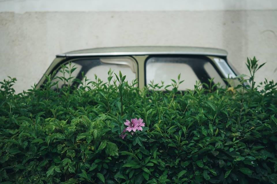 Fotografia se vede mai bine la Baia Mare, la prima ediție a Salonului European de Fotografie