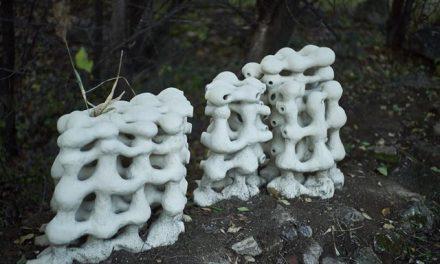 BiotopArt Bucharest: Obiecte de ceramică și sculptură au devenit habitate pentru speciile din Parcul Natural Văcărești
