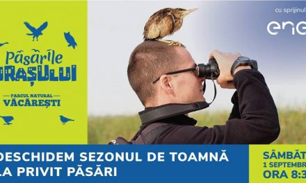 Birdwatching @ Parcul Natural Văcărești