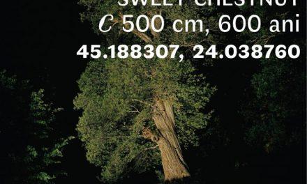 """Expoziția de fotografie """"Arbori Bătrâni"""" a artistului Florin Ghenade @ Muzeul Național al Țăranului Român"""