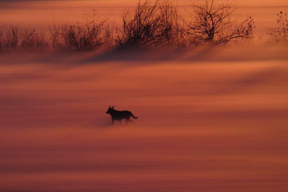 Culorile iernii – Aurel Tar